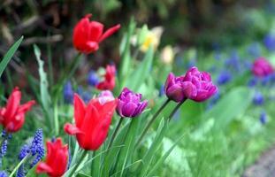 närbild av blommor i en trädgård foto