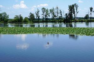 floden Donau vid Ulm foto