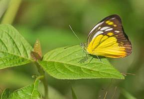 gul fjäril på gröna blad