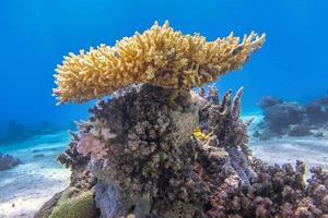 fantastisk korallbildning foto
