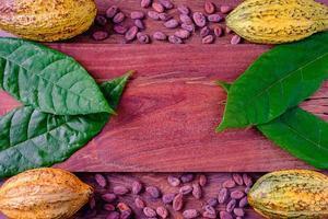 färska kakaobönor