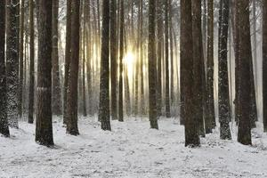 vinter skogsmark snö scen