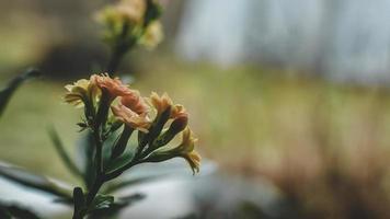 blommade vårblommor foto