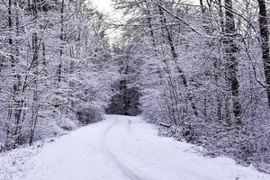 vinterlig skogsväg