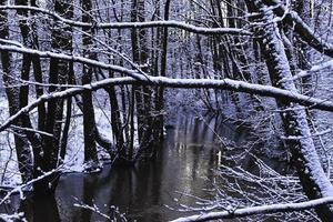 snöig vit skog flod