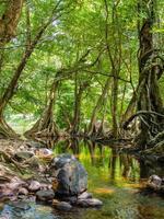 flod som går genom en grön skog foto