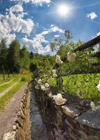 blommig stig i de alpina bergen