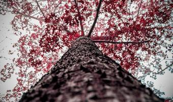 brunt och rött träd fotografering med låg vinkel foto