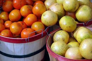 apelsiner och grapefrukt foto