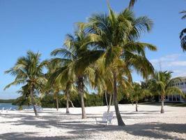 strand i florida foto