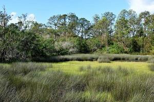 florida våtmark på sommaren foto