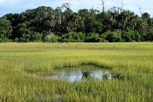 våtmark i florida foto
