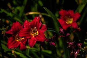 en vacker blomma vy foto