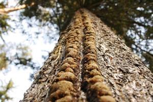 tittar upp på ett träd