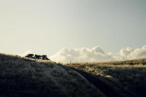 gräsbevuxen åker vid solnedgången