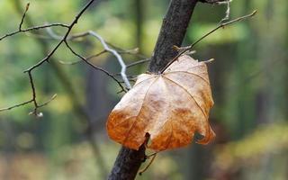 torkat blad i ett träd