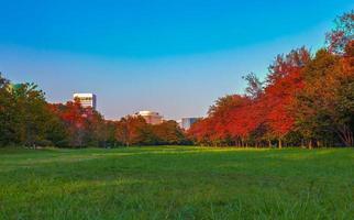 höstlöv i parken foto