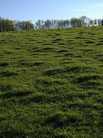 gräsbevuxen kulle och träd under dagen