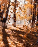 höstens trädblad