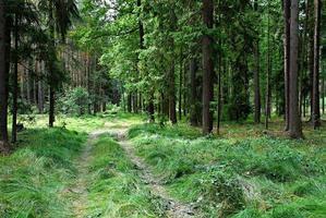 väg genom skogen under dagen foto