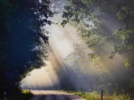 solstrålar och dimma i en skog