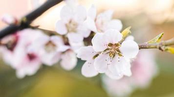 grunt fokus för vita blommor foto