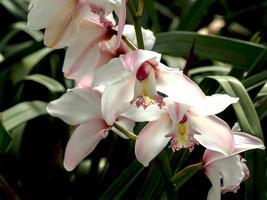 vit och rosa blomma
