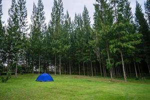 blått tält i skogen