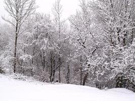 träd och fält täckta av snö foto