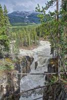 floden mellan träden foto