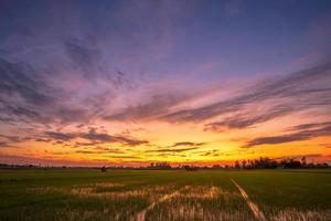 solnedgång på ett grönt fält foto