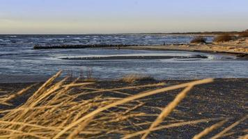 vetegräs nära havsvattnet