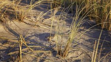 kustdyn gräs foto