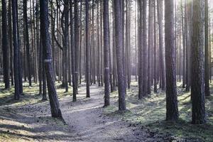 höga soliga träd