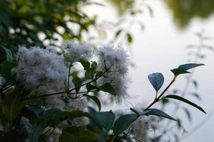 buske med med blommor