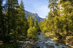 floden rinner genom skogen foto