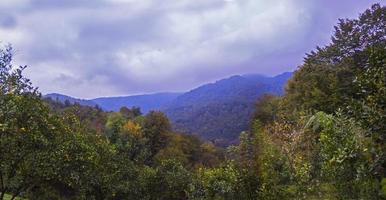 djungel och dimmiga berg foto