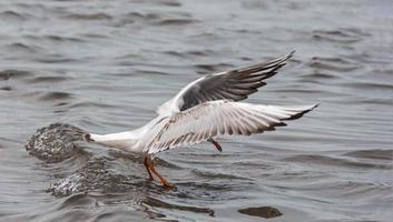 fågel som söker efter fisk foto