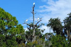 tropiska fåglar på ett träd foto