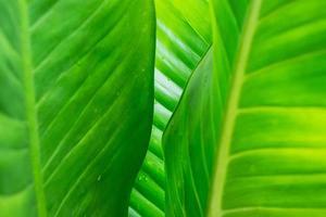 grönt blad bakgrund med regndroppar