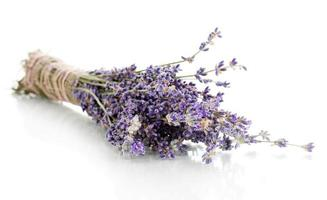 lavendel blommor isolerad på vitt foto