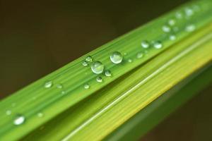 vattendroppe på blad foto