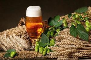 öl med humle och korn foto