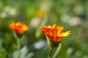 vacker orange blomma foto
