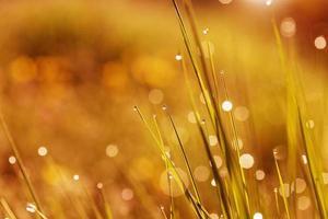 vattendroppar på gräs foto