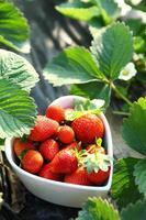 jordgubbe i hjärta form skål foto