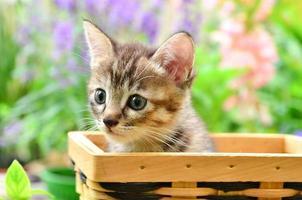kattunge i korgen foto
