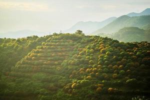fruktträdgård på kullen