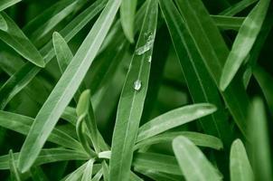 vattendroppe på grönt gräs. morgon natur bakgrund foto