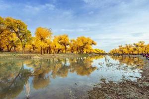inre mongoliet, Kina populus euphratica foto